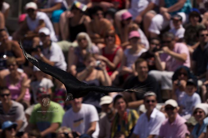 oiseaux vld Une journée au Parc des oiseaux av Yves Bouthérand