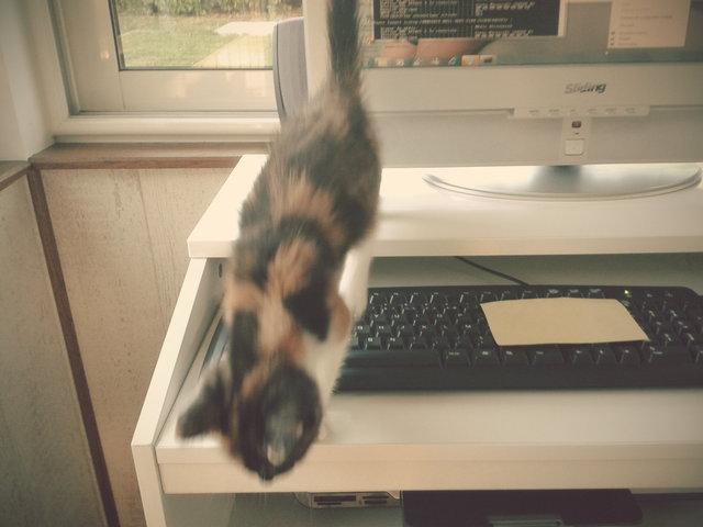 Chat sur le clavier
