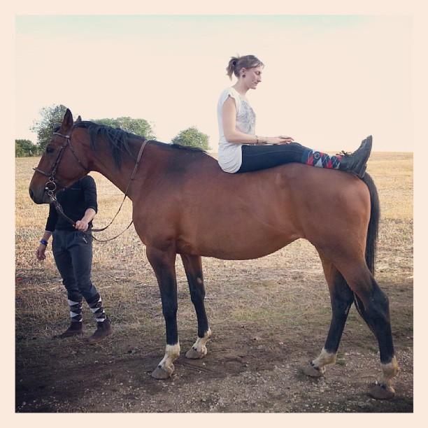 Wrong horse