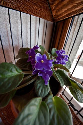 Fleur sigma 8-16