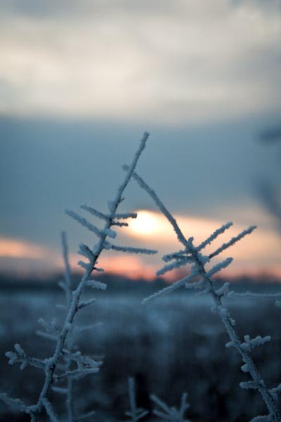 Snow Tamron 17-50 VC