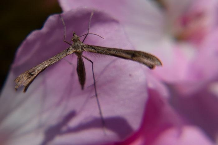 moustique macro